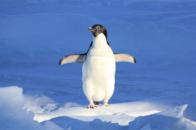 Are you up to speed with the Google Penguin update?