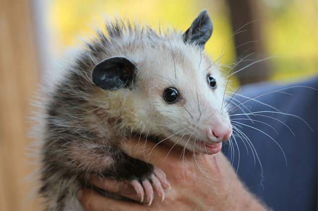 Google's Possum Algorithm Update