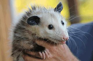 Your Guide to Google Possum