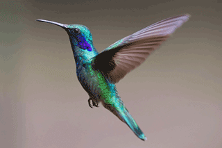 What was Google's Hummingbird Update?