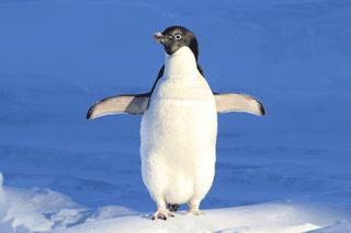 Penguin - Google's Fight Against Link Spam